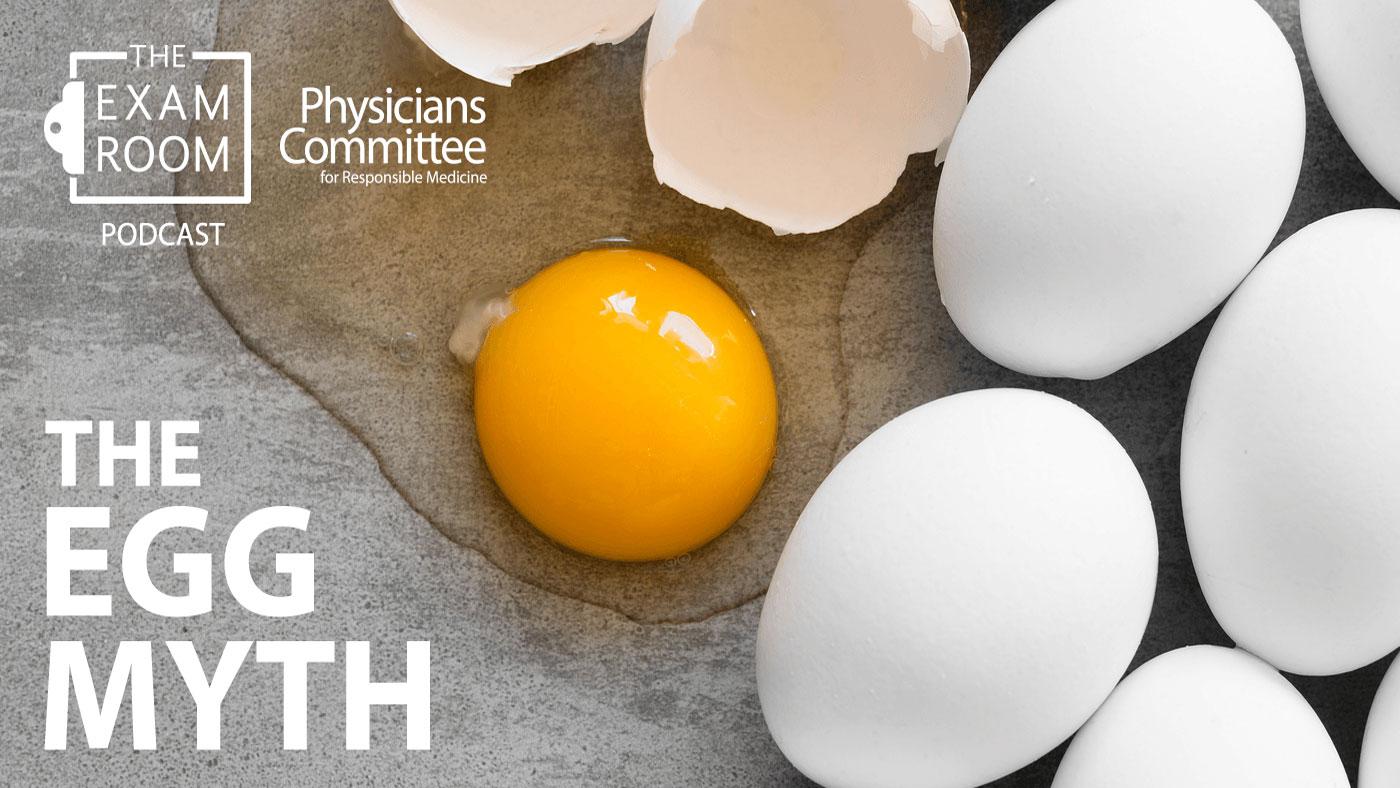 The Egg Myth