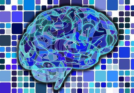 3d-printed-polymer-brain