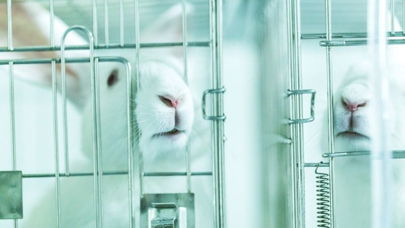caged rabbit